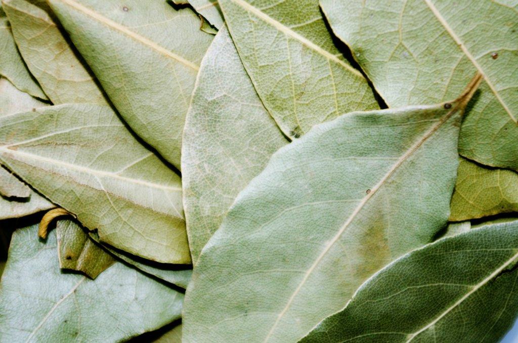 kurutulmuş defne yaprağı yakın çekim