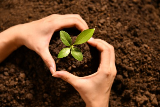 Taze dikilmiş bitki ortada kalacak şekilde kalp işareti