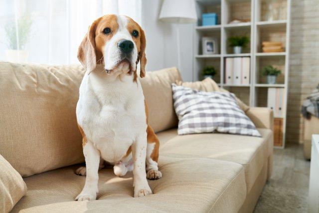 Evcil Hayvan Besleyenler için Evi Tüylerden Arındırmanın Yolları